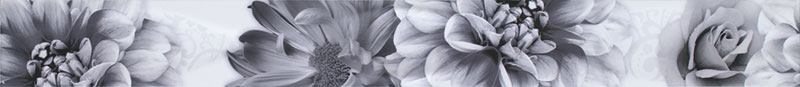 fiore_negro-listelo